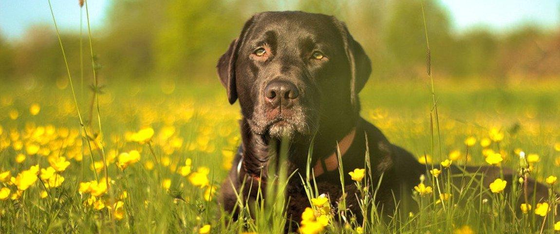 Jak chronić psa przed kleszczami